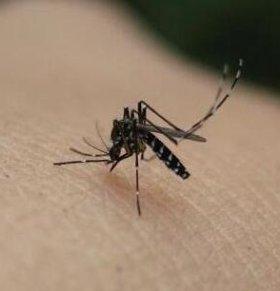新加坡寨卡疫情:242例寨卡病毒