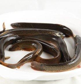 吃泥鳅有什么好处 男人吃泥鳅壮阳补肾