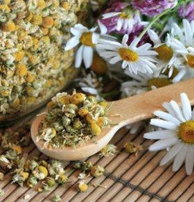 菊花可以减肥吗 菊花的热量高吗 菊花的营养价值