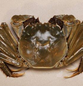 河蟹可以减肥吗 河蟹的热量高吗 河蟹的营养价值