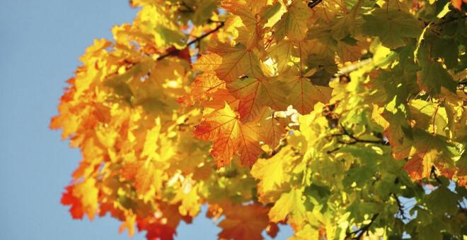 秋分吃什么好 秋分怎么养生 秋分养生方法