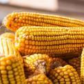下焦湿热吃什么食物 下焦湿热吃什么 下焦湿热如何饮食
