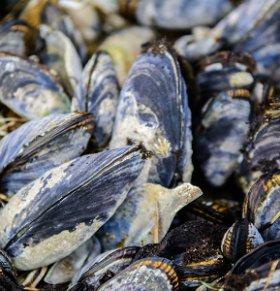 海蚌可以减肥吗 海蚌的热量高吗 海蚌的营养价值
