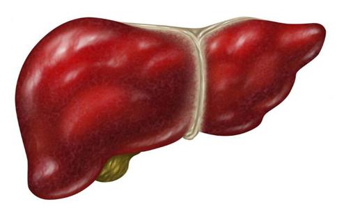 生活中如何预防肝病 预防肝病的方法 怎么预防肝病