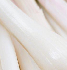 蒲菜可以减肥吗 蒲菜的热量高吗 蒲菜的营养价值