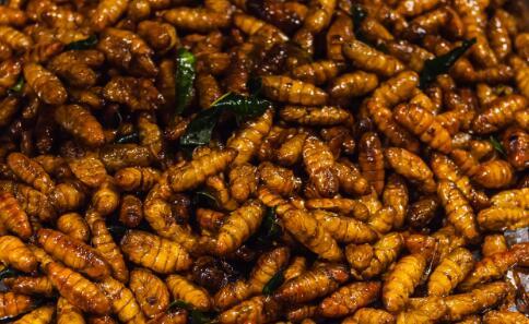 被罚当众吃活虫 员工被罚当众吃活面包虫 面包虫的营养价值