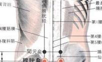 膀胱俞穴的功效与作用 按摩膀胱俞穴的作用 膀胱俞穴的准确位置图