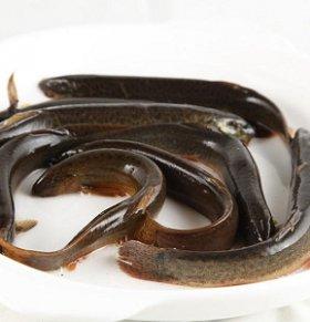 泥鳅可以减肥吗 泥鳅的热量高吗 泥鳅的营养价值