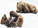 冰雪中玩耍的呆萌动物 千奇百怪的姿势很搞笑