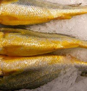 小黄鱼可以减肥吗 小黄鱼的热量高吗 小黄鱼的营养价值