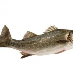 鲈鱼的热量高吗 鲈鱼的营养价值高吗 鲈鱼可以减肥吗