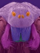显微镜下尘螨长什么样 样子狰狞令人恐惧