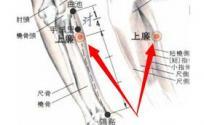 上廉穴的功效与作用 上廉穴的准确位置图 按摩上廉穴的作用