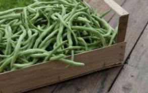孕期食谱 莲藕清炒四季豆的做法