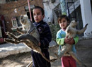 动物被饿成干尸成玩具 原因是资金缺乏无法喂养