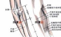 四渎穴的功效与作用 按摩四渎穴的作用 四渎穴的准确位置图