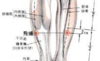 飞扬穴的功效与作用 飞扬穴的准确位置图 按摩飞扬穴的作用