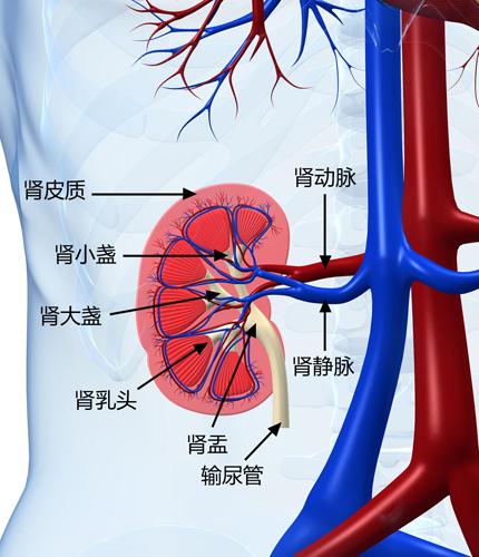 肾病主要分类 肾病的常见症状 肾病主要包含哪些疾病