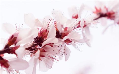 桃花茶的功效是什么 桃花茶有什么作用 桃花茶的功效和作用