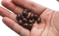 三层茴香丸的功效与作用 三层茴香丸的功效 三层茴香丸的作用