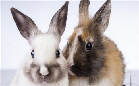 兔子咬断2岁女童手指 被宠物咬了怎么办 兔子会咬人吗
