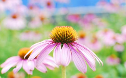 春季常见呼吸道传染病有哪些 呼吸道传染病防治知识 春季如何预防传染病