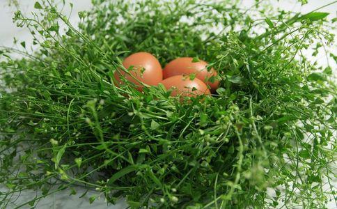 春季养生食谱有哪些 春季吃什么养生 春季如何养生