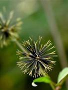 农村中最常见的中草药
