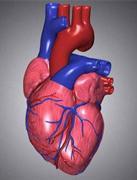 身体器官衰竭如何保养