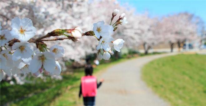 春分节气如何养生 春分节气的养生方法 春分怎么养生