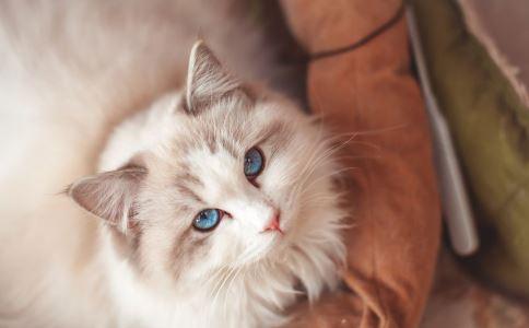 养猫会让孩子变笨 家有孩子养猫要注意什么 孩子养猫要注意什么