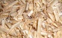 白杨树皮的功效与作用 白杨树皮是什么 白杨树皮的功效