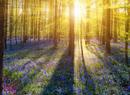 全球十大最美森林美景 美如梦幻仙境