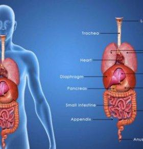 肺结核能治好吗? 肺结核治疗期间饮食注意