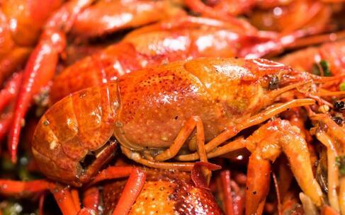 捕获罕见蓝色龙虾 吃小龙虾注意什么好 吃小龙虾注意事项