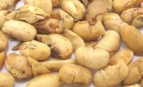 大豆黄卷的功效与作用 大豆黄卷是什么 大豆黄卷的功效