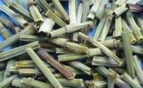木贼的功效与作用 木贼是什么 木贼的功效