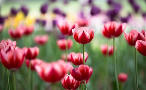 哮喘患者生活注意事项 哮喘护理 哮喘如何防花粉