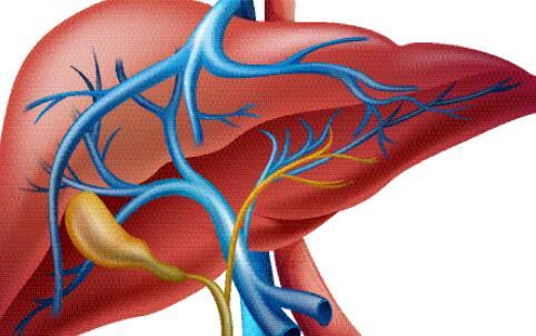 器官捐献的条件 器官捐献的方式 什么是器官捐献