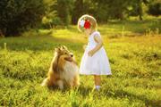 养宠物会诱发哮喘 引发哮喘的原因 动物毛发诱发哮喘