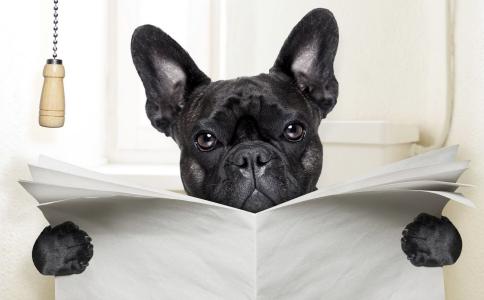 宠物过敏怎么办法 宠物过敏的真正原因 如何减少宠物过敏
