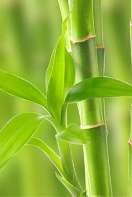 吸雾霾的植物有多少种