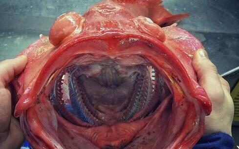 最奇异鱼类真容 奇异鱼类 奇异鱼类真容曝光
