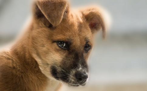 因狗闻腿捅狗主人 养狗前要注意什么 养狗的时机如何分辨