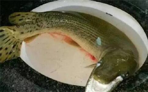 网曝高校钓起怪鱼 鳄雀鳝是什么 鳄雀鳝能吃吗