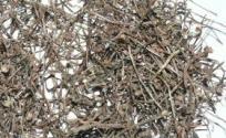 白花蛇舌草的功效与作用 白花蛇舌草是什么 白花蛇舌草的功效