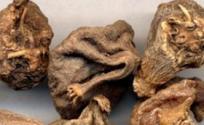 山慈菇的功效与作用 山慈菇是什么 山慈菇的功效