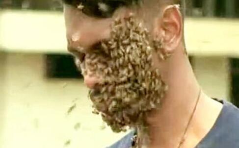 头上预防6万蜜蜂布满蜜蜂蛰伤叫幼儿园教案蜘蛛图片