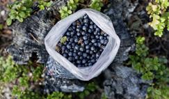 吃什么水果对眼睛好 什么水果对眼睛好 吃什么对眼睛好