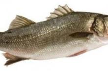 孕期安胎食谱 清蒸鲈鱼的做法